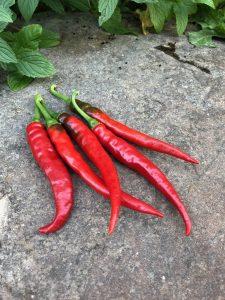 Ring of Fire pepper
