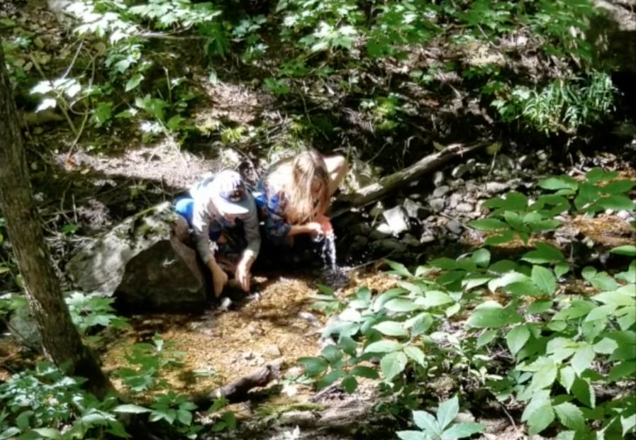 Children drinking from stream in forest